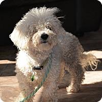 Adopt A Pet :: Oscar - Lafayette, IN