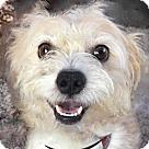 Adopt A Pet :: Baxter