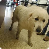 Adopt A Pet :: Fred - Kyle, TX