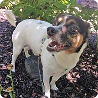 Adopt A Pet :: Moko - Fennville, MI