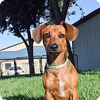 Adopt A Pet :: Tucker - Meridian, ID