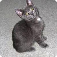 Adopt A Pet :: Blue - Kirkwood, DE