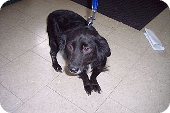 Dachshund Mix Dog for adoption in Olivet, Michigan - Lola
