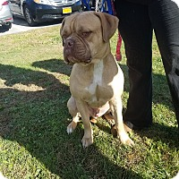 Adopt A Pet :: Titan - Maybrook, NY