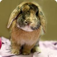 Adopt A Pet :: Potter - Voorhees, NJ
