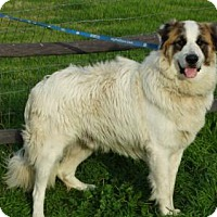 Adopt A Pet :: George - Vacaville, CA