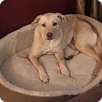 Adopt A Pet :: Banana - Austin, TX