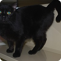 Adopt A Pet :: Kink - New Castle, PA
