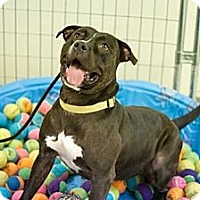 Adopt A Pet :: Hershey - Houston, TX