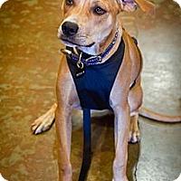Adopt A Pet :: Benny - Orange, CA