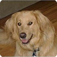 Adopt A Pet :: Annie - Denver, CO