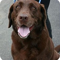 Adopt A Pet :: Susie *Pet Of The Month* - Canoga Park, CA