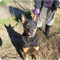 Adopt A Pet :: Poppy - No.Charleston, SC