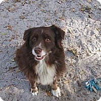 Adopt A Pet :: Chili Pepper - Nokomis, FL