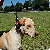 Adopt A Pet :: Lucy - Williston, FL