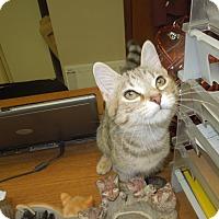 Adopt A Pet :: Crystal - Medina, OH