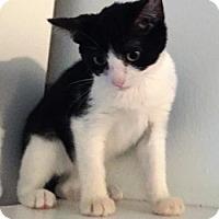 Adopt A Pet :: Katniss - Modesto, CA