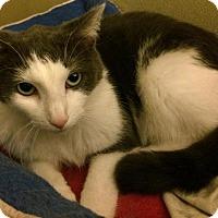 Adopt A Pet :: Wallis - South Bend, IN