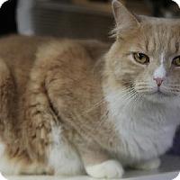 Adopt A Pet :: Columbus - Bronx, NY