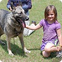 Adopt A Pet :: Leo AD 01-23-16 - Preston, CT