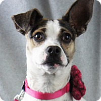 Adopt A Pet :: Pixie - Minneapolis, MN