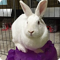 Adopt A Pet :: Thistle - Woburn, MA