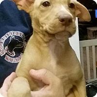 Adopt A Pet :: Phoenix - Gainesville, FL