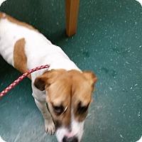 Adopt A Pet :: Penny - Boston, MA