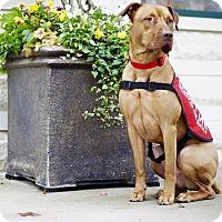 Adopt A Pet :: Kovu - Charlotte, NC