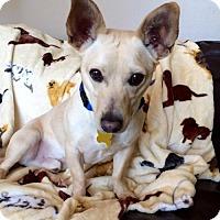 Adopt A Pet :: Domingo - Salt Lake City, UT