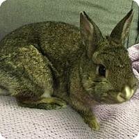 Adopt A Pet :: Dreamfinder - Woburn, MA