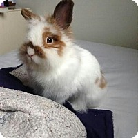 Adopt A Pet :: Pouf - ADOPTED - Livonia, MI