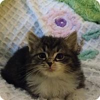 Adopt A Pet :: Bangor - Berlin, CT