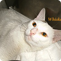 Adopt A Pet :: Whiskey - El Cajon, CA