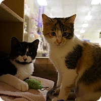 Adopt A Pet :: Batman & Ivy - Salem, NH