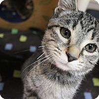 Adopt A Pet :: Brianna - Medina, OH
