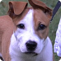 Adopt A Pet :: Chance - Enfield, CT