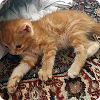 Adopt A Pet :: Elengale - Mississauga, Ontario, ON