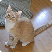 Adopt A Pet :: Lemmon - Quail Valley, CA