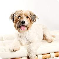 Adopt A Pet :: Morgan - Omaha, NE