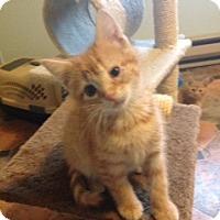 Adopt A Pet :: Jolly - Whitehall, PA