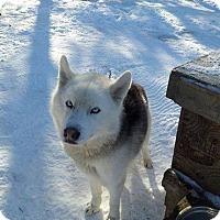 Adopt A Pet :: Gunnar - Cavan, ON