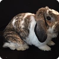 Adopt A Pet :: Jasper, Jinx, and Jabba - Conshohocken, PA