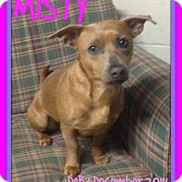 Adopt A Pet :: MISTY - Allentown, PA