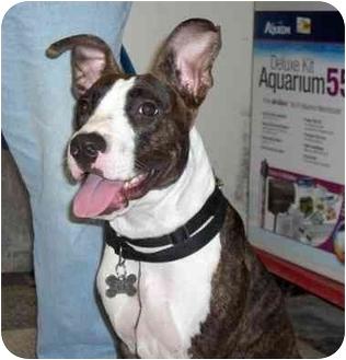 Terrier (Unknown Type, Medium) Mix Dog for adoption in Houston, Texas - Aisha