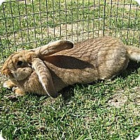 Adopt A Pet :: Peaches - Bonita, CA