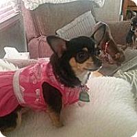 Adopt A Pet :: Bella - Seattle, WA