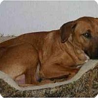 Adopt A Pet :: Jinga - Gilbert, AZ