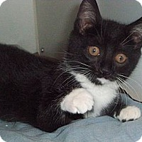 Adopt A Pet :: Peppermint - Secaucus, NJ