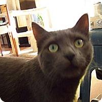 Adopt A Pet :: Tinsel - Orinda, CA